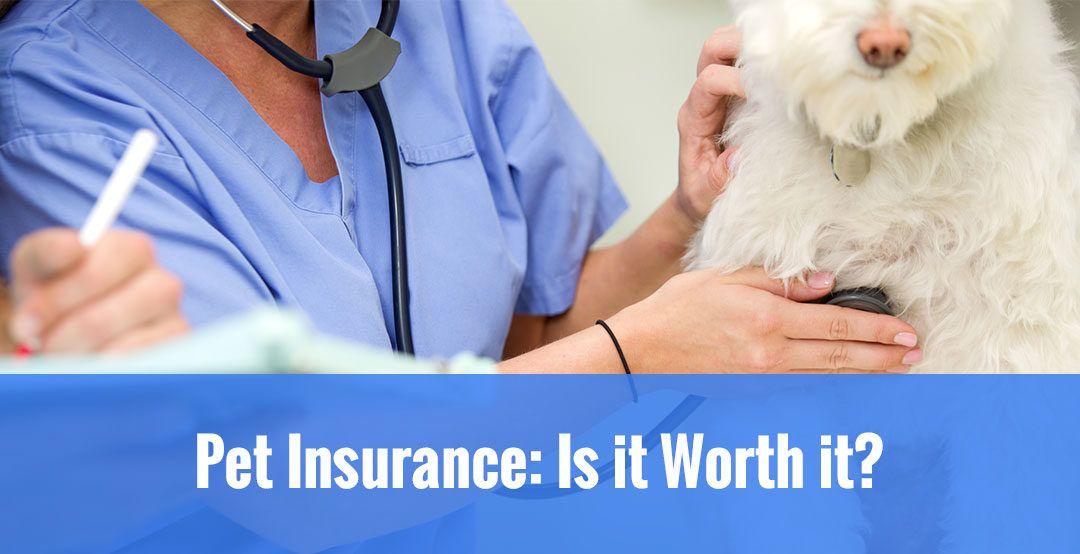 Pet Insurance Is It Worth It Dog insurance, Pet