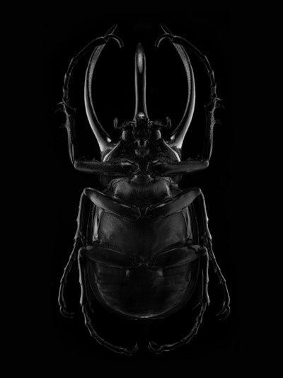 #black #scarab by Antoine Picard
