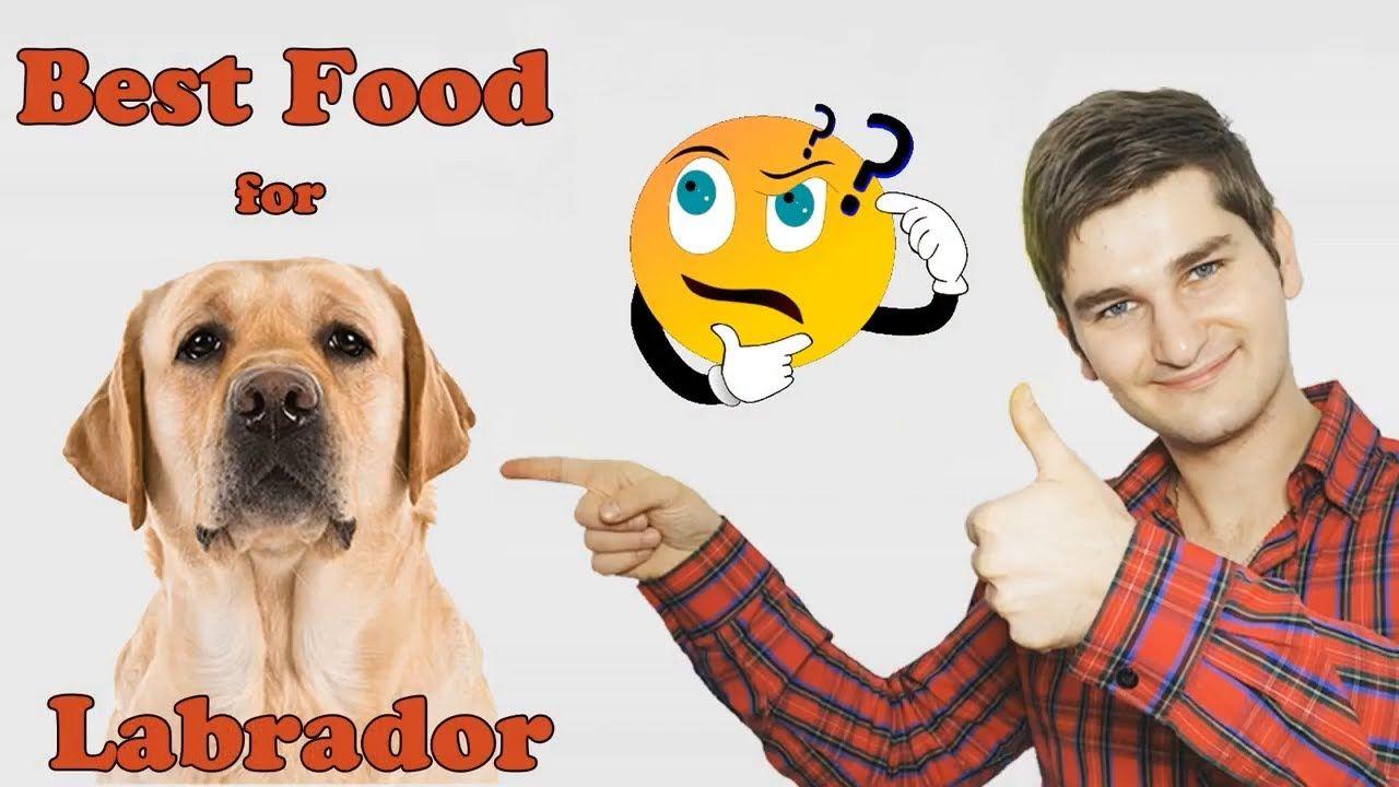 Best Dog Food For Labradors Revealed By Dog Food Judge Https