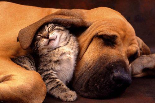 PUPPY POSTER Cute Little Dog RARE HOT NEW 24X36