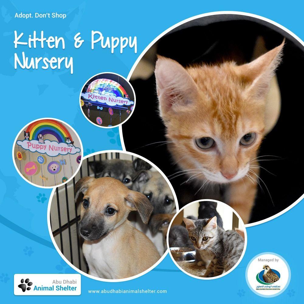 Rescue Profile Idea Cat Shelter Animal Shelter Dog Adoption Event