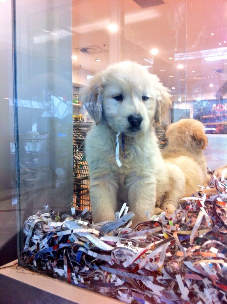 Please Get Me Out Of This Pet Shop Window And Take Me Home