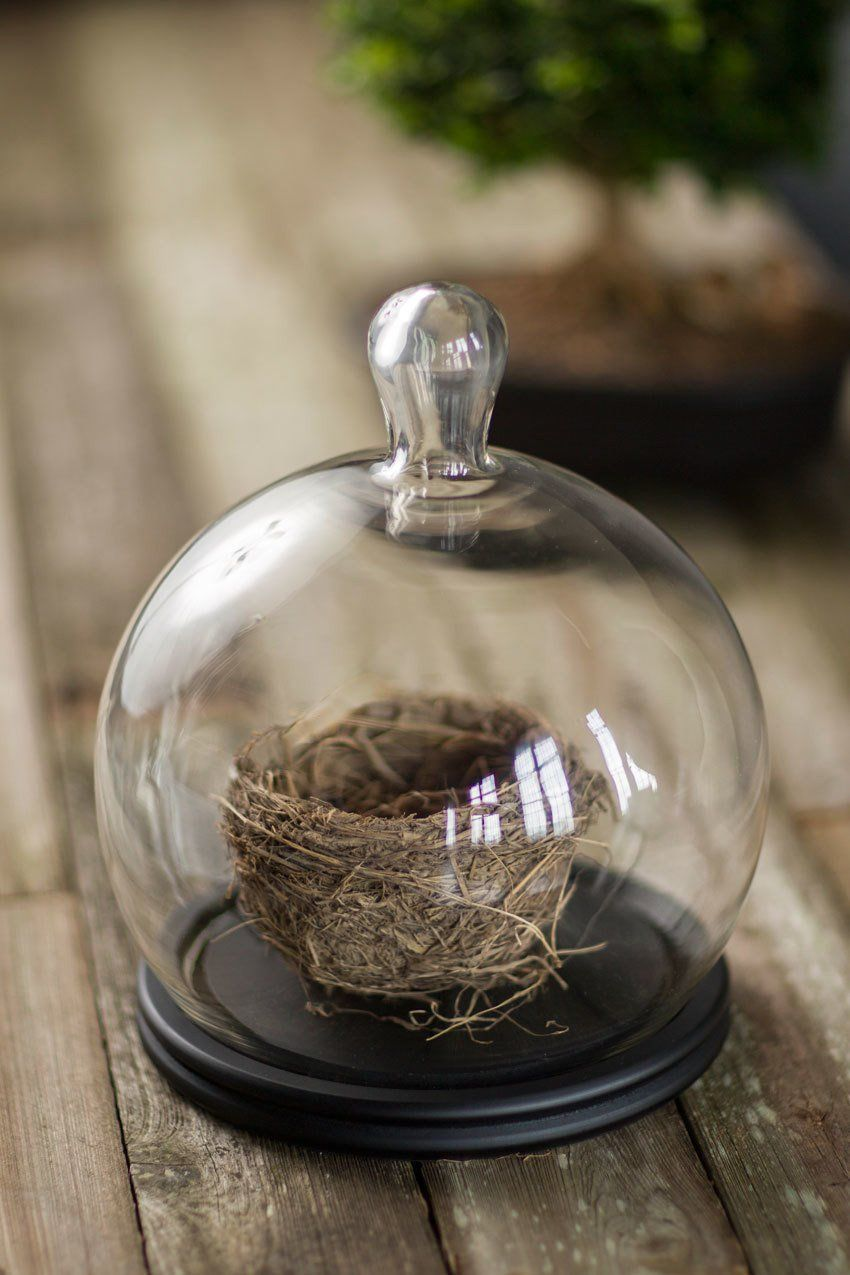 Round Glass Dome With Wooden Base Cloches Pinterest Glass