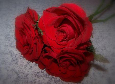 Tres Bellas Rosas