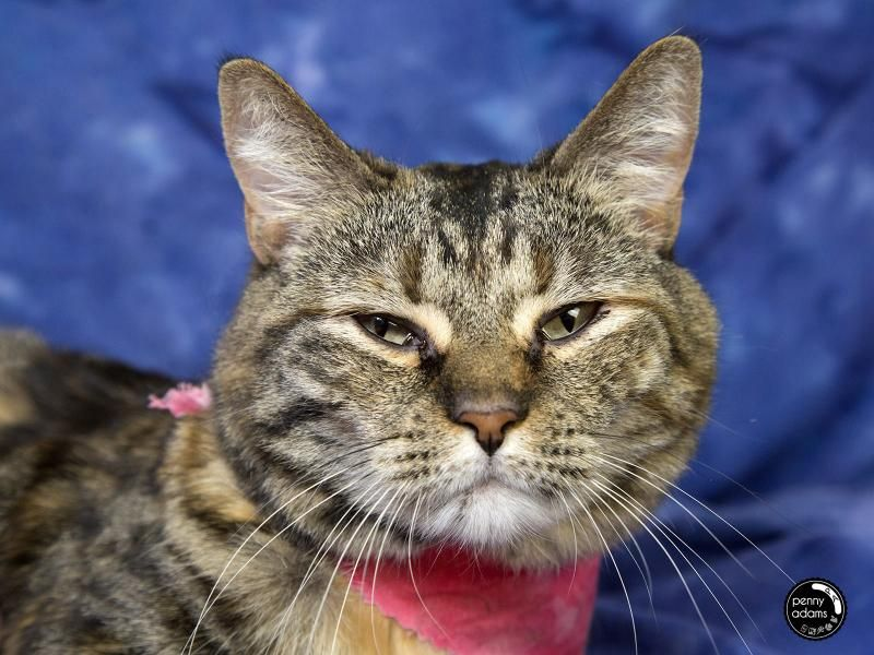 Adopt CALI on Animals to adopt Pet toys, Pet care, Cats