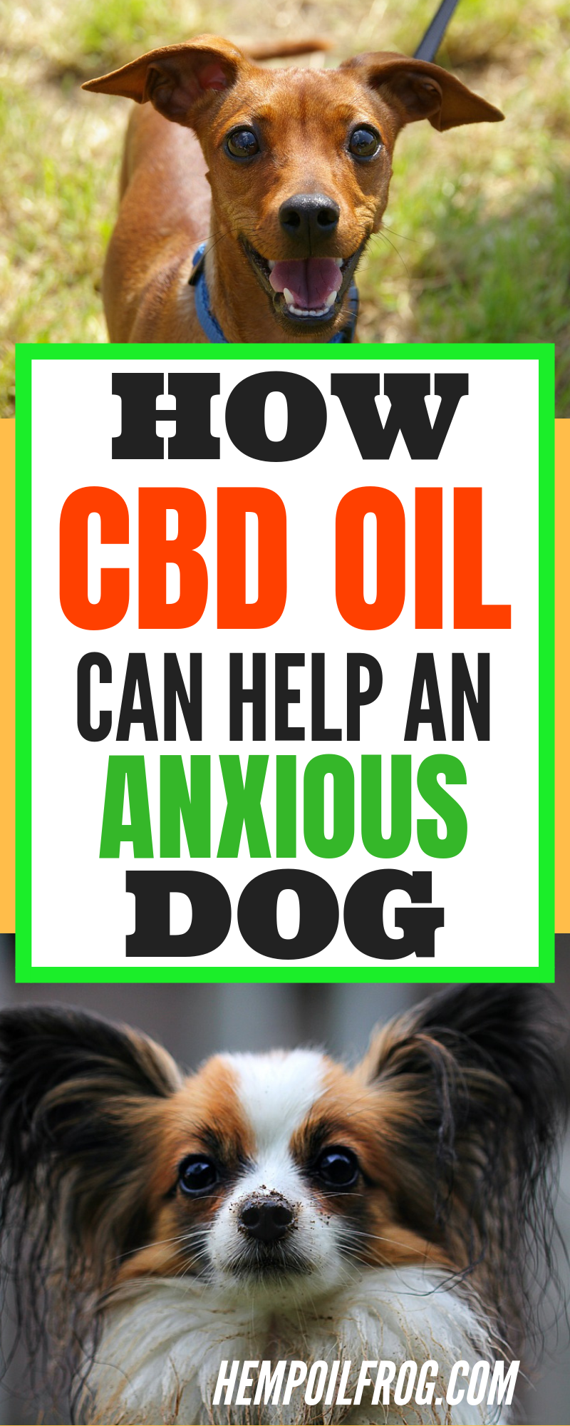 CBD Oil for Dogs Is It Safe and Effective? All You Need