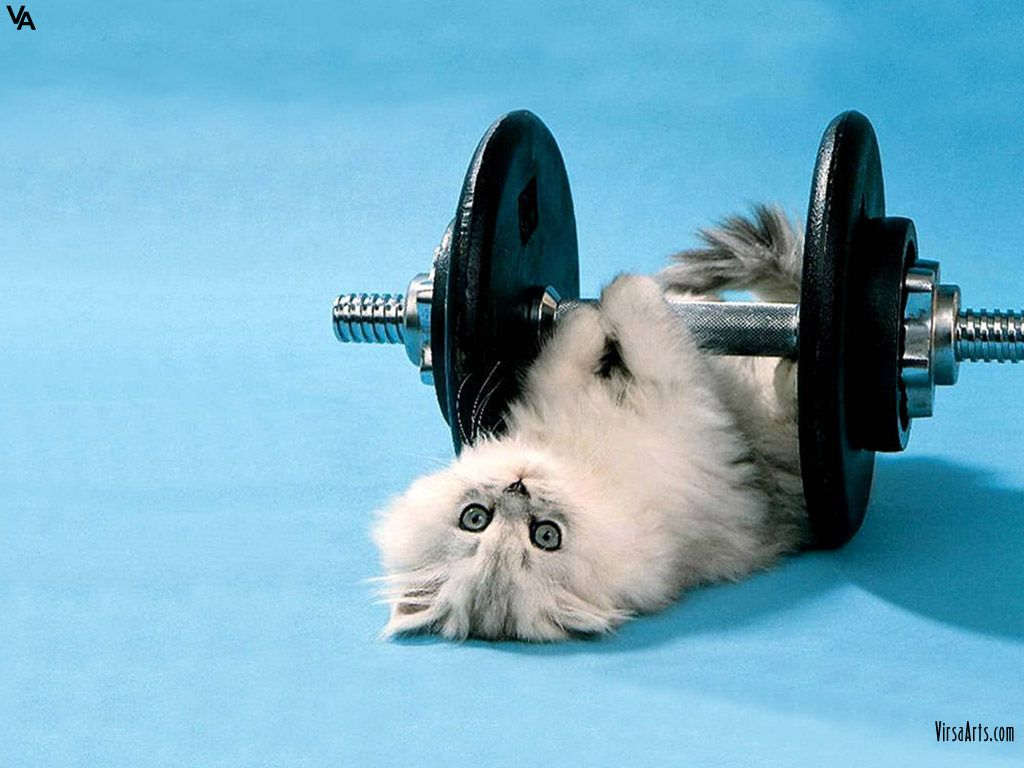 Cat Doing Workout Cat Exercise Funny Kittens Funny Funny