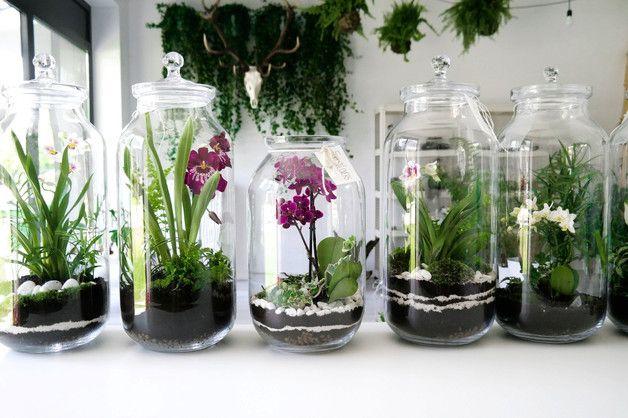Las W Szkle Kompozycja Flos 1 Orchid Terrarium Bottle Garden Garden Vases