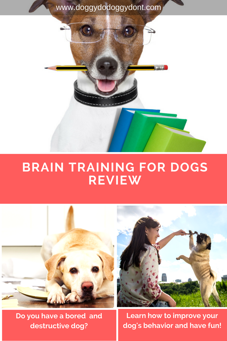 Increase Your Dogs Brain Power Brain Training For Dogs