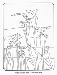 Carnivorous Plant Coloring Pages Background