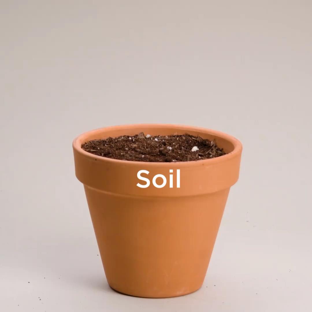 Photo of Du vil våte plantene dine med disse uvanlige hageanleggene!