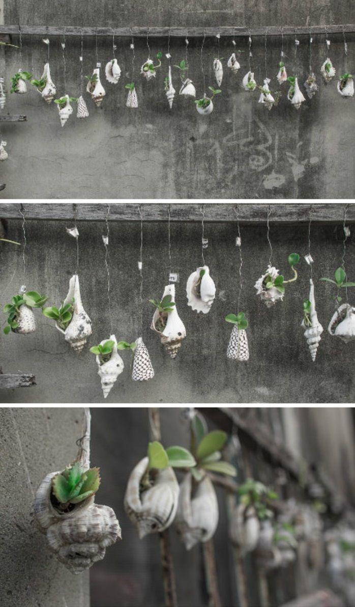 Diy Planter Des Plantes Grasses Dans Des Coquillages Suspendus