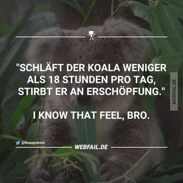 Am Wochenende bin ich auf jeden Fall ein Koala #funnyfails