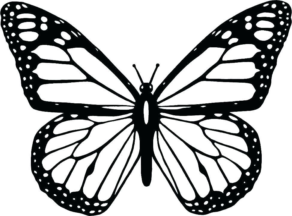 Monarch Butterfly Coloring Pages Largest Cartoon Butterfly Coloring Butterfly Clip Art Butterfly Outline Butterfly Coloring Page