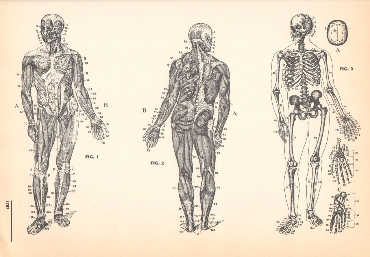 1000 images about medical diagrams on pinterest muscle and  : medical diagram - findchart.co