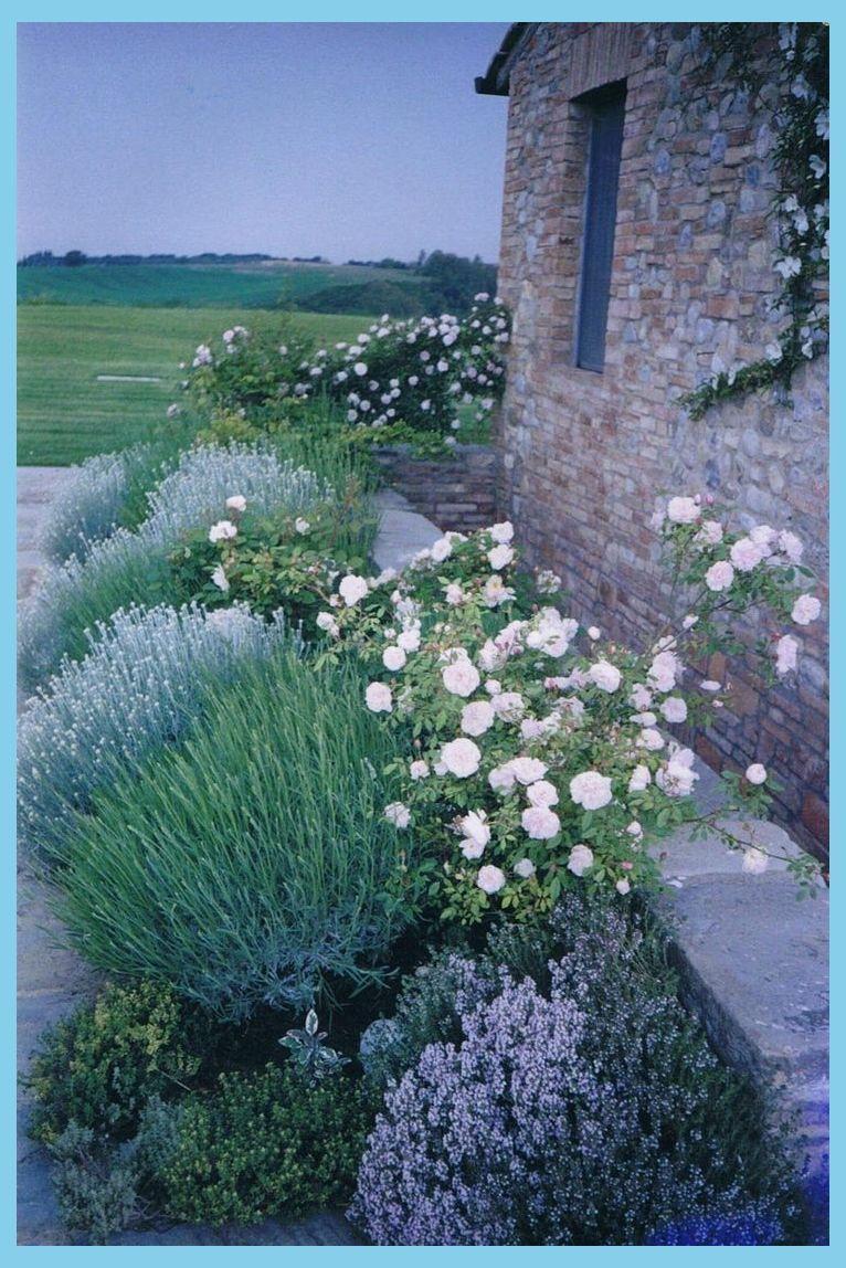 Mit Rosen bepflanzte Kräuter - Ich würde gerne an einem Ort wie diesem leben Kräuter zum Wach...