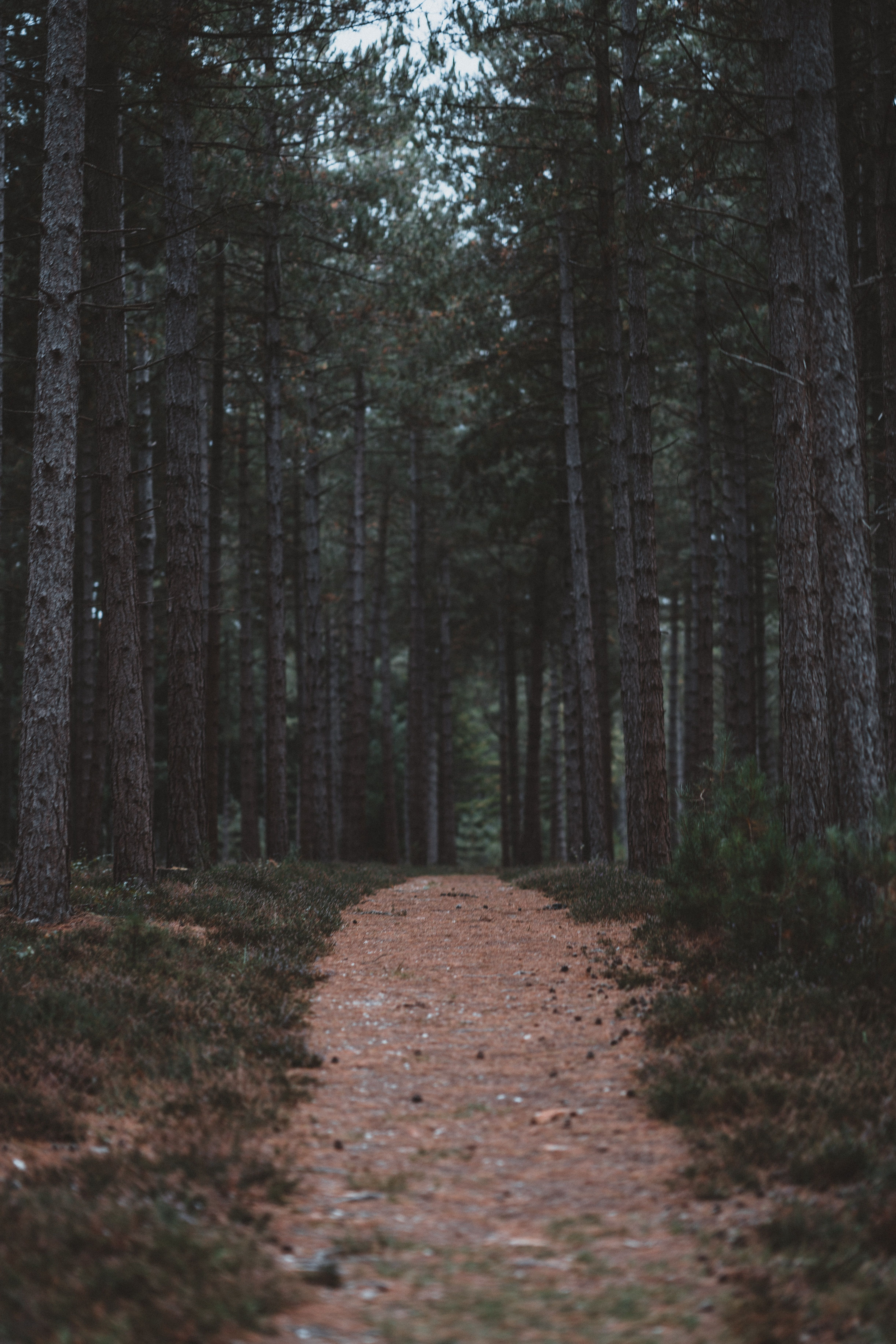 New Forest National Park United Kingdom Brown Pathway Between Trees Sony Ilce 7rm3 D7e1e7 Forest Wallpaper Forest Pictures Forest Trail