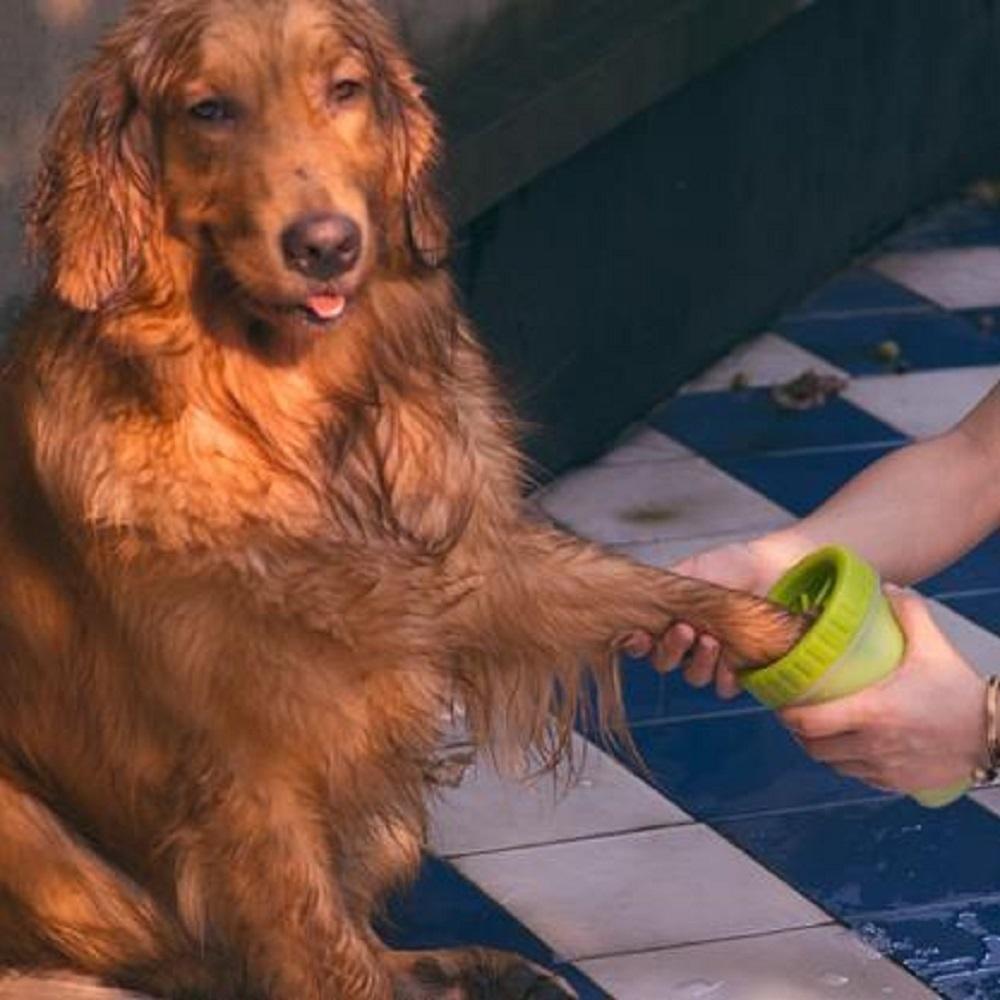 Pet Paw Cleaner #inspireuplift explore Pinterest