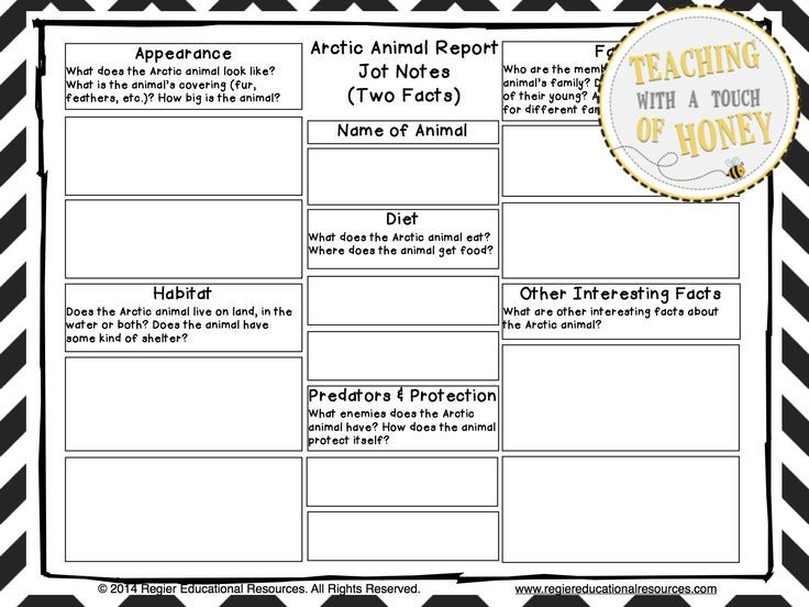 Arctic Animals Bundle Report Writing Templates and Trading Cards - animal report template example