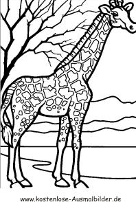 Ausmalbild Giraffe Ausmalen Ausmalbilder Tiere Giraffe