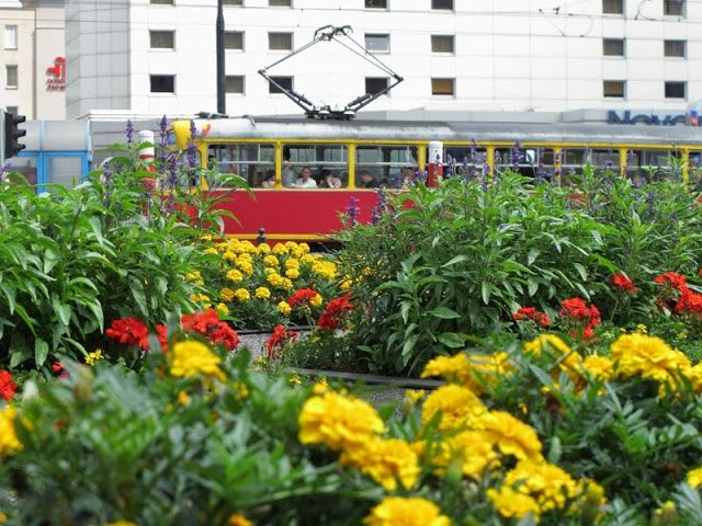 Tram in flowers, Warsaw downtown, Poland