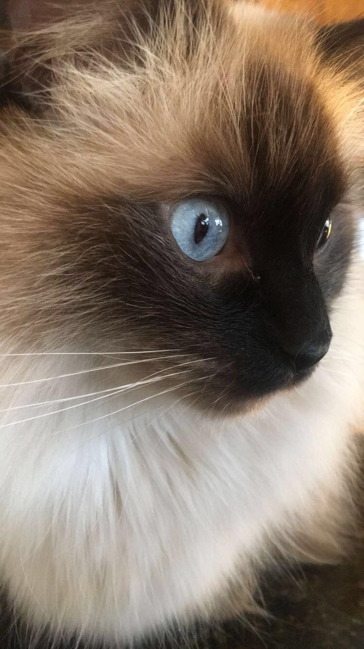 Blue eyes - Gonzo