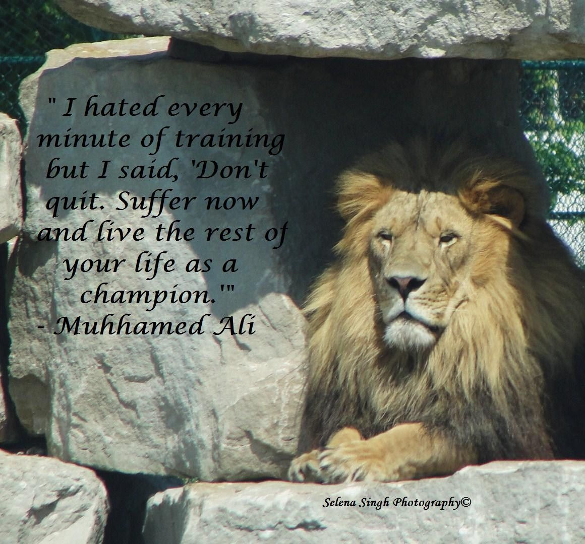 Ali quote. Don't give up. Inspiration :: selenasingh.com