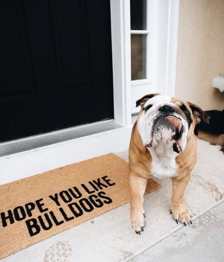 Pin By C A I T L I N F A N E On Puppers Bulldog Puppies