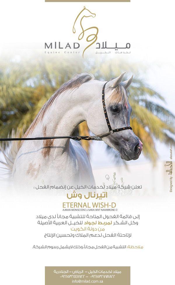 ميلاد اتيرنال وش ينضم إلى قائمة الأفحل المتاحة للتشبية Horses Arabian Horse Arabians