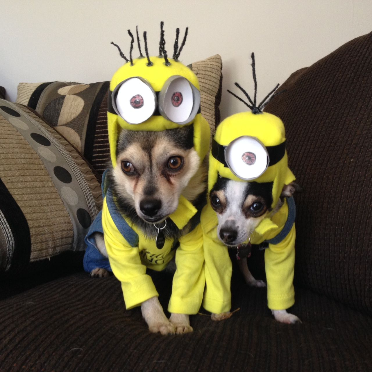 This is so cute Dogs Minion Halloween costumes I love dogs