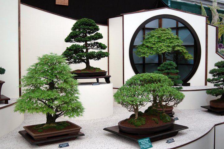 Bonsai bonsai tree