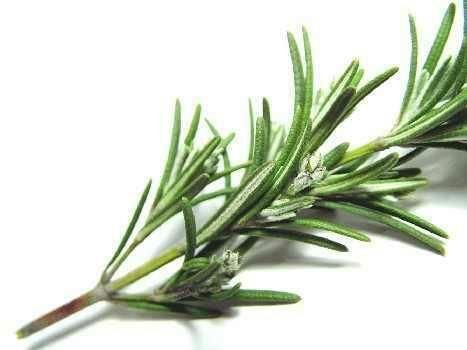 Rosemary Burn Rosemary To Rid Your Home Of Negative Energy Or As