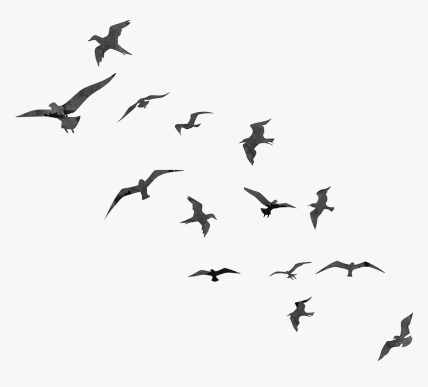 Bird Flight Swallow Flock Transparent Birds Flying Silhouette Hd Png Download Is Free Transparent Birds Flying Photography Bird Silhouette Art Birds Flying