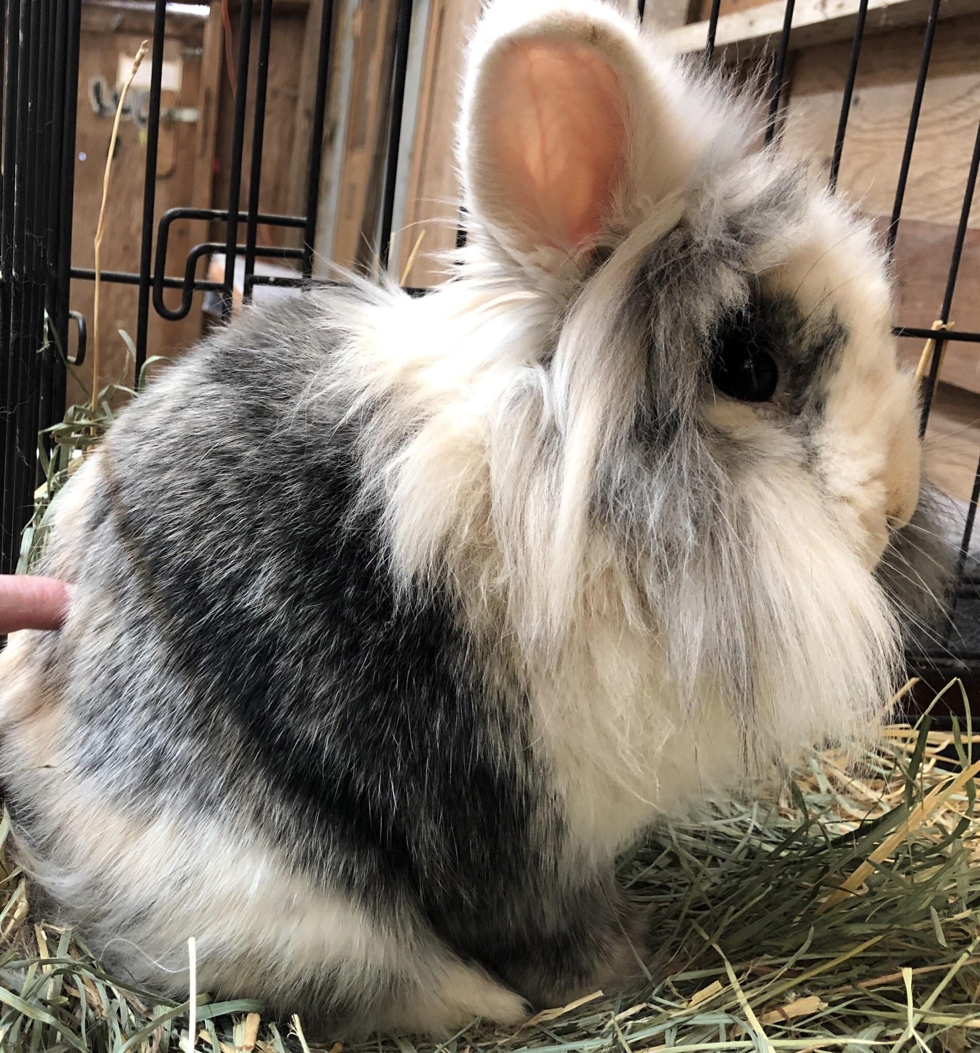 What To Buy Next For Your Bunny Rabbit Pet Bunny Pet Rabbit Care Pet Rabbit