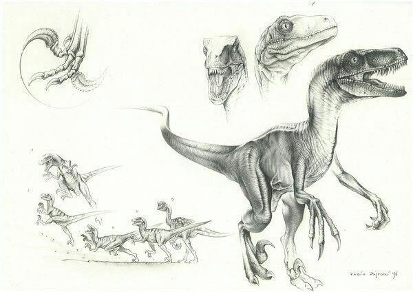 Raptor ideation Velociraptor drawing, Dinosaur drawing