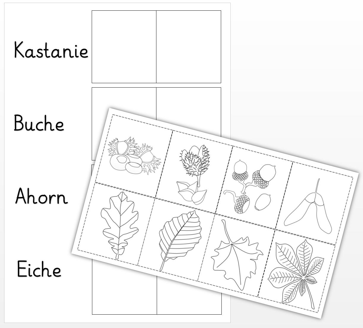 pin von isabell schultz engelhard auf kreativ unterrichten laubbaum wald grundschule und. Black Bedroom Furniture Sets. Home Design Ideas