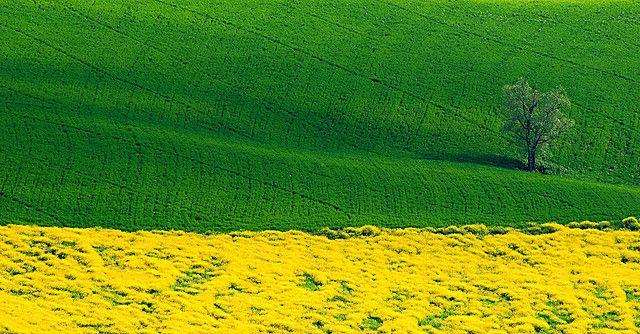 The tree in green & yellow by marco rubini