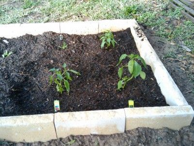 best soil for vegetable garden. best soil for growing vegetables - preparation your vegetable garden | soil, and gardens o