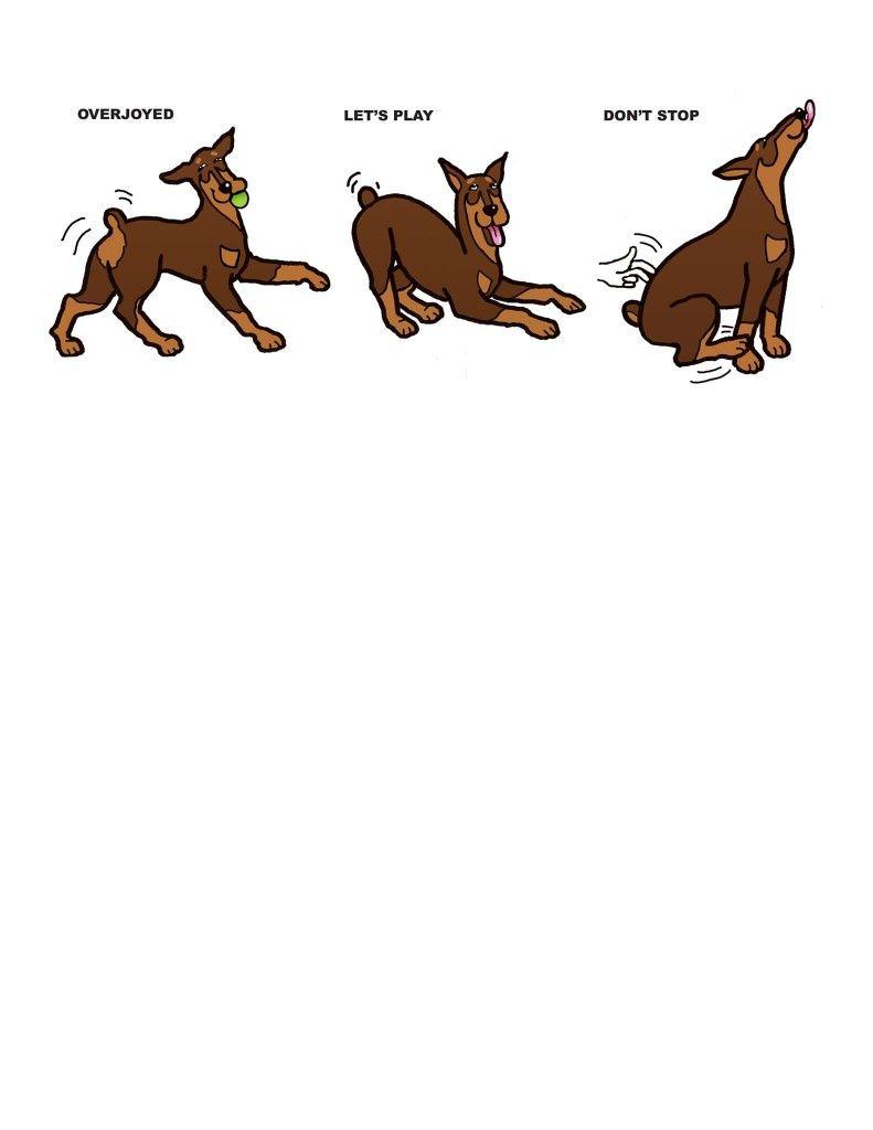 Pin By Amie Hazelwood On Denver Doberman Dogs Doberman Pinscher