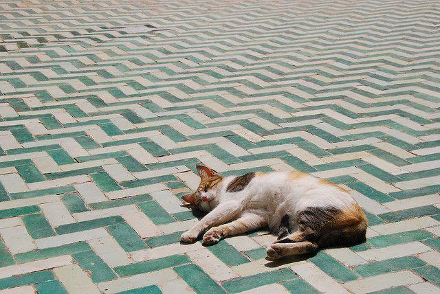 Cat on aquamarine zigzag tile