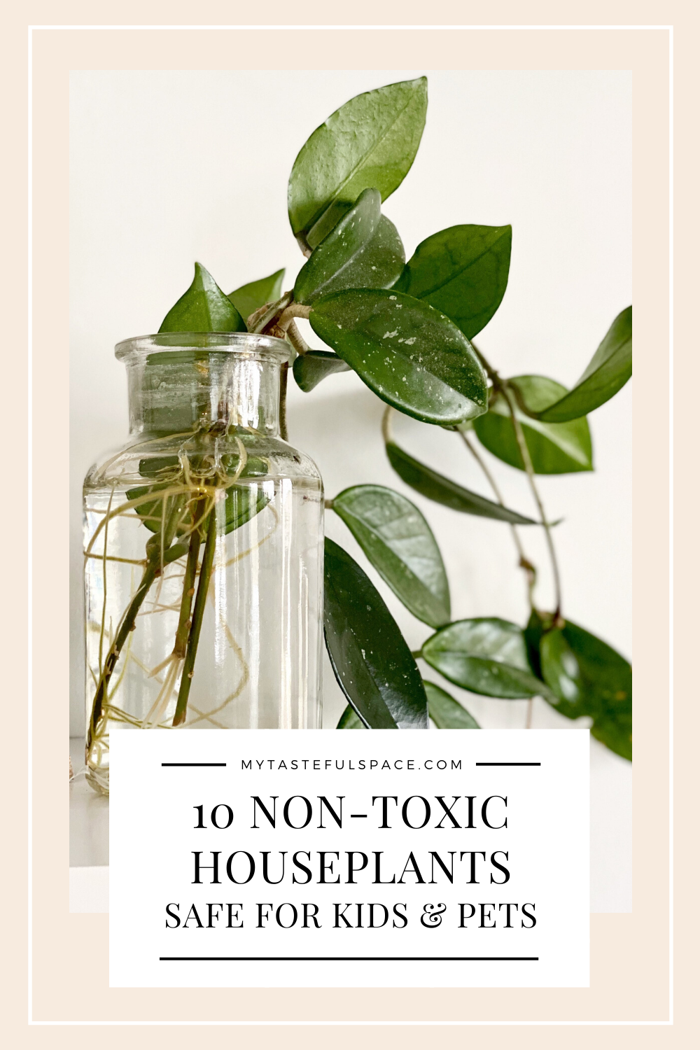 Low Maintenance NonToxic Indoor Plants in 2020 House