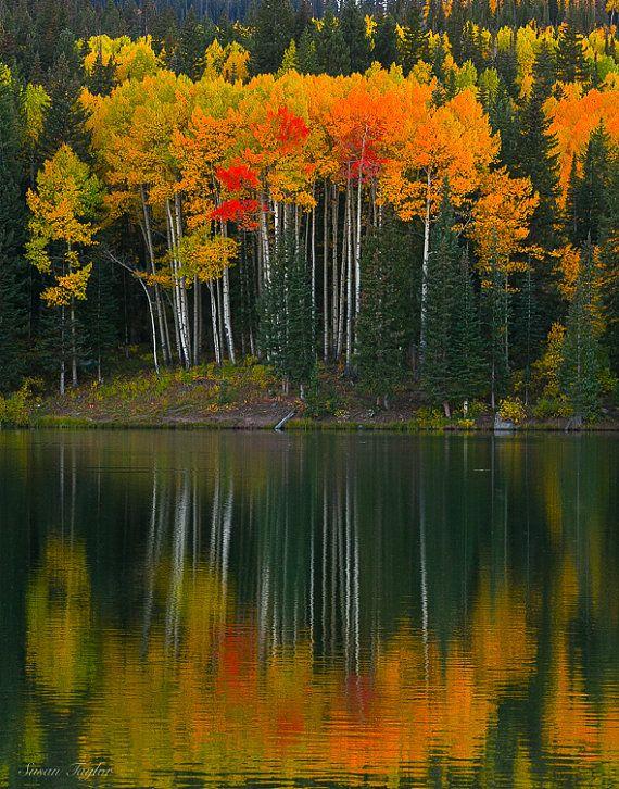 Autumn Photography, Aspen Grove Photo, Colorado Rockies Art, Large Tree Reflection Decor, Orange Green, Forest Canvas Limited Edition Print