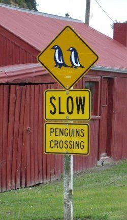 cute penguins...