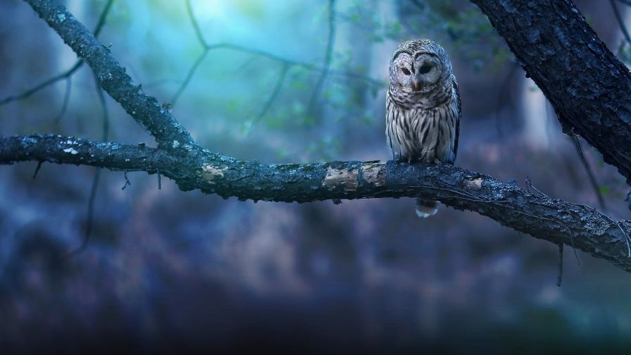 Owl at tree HD Wallpaper Square art