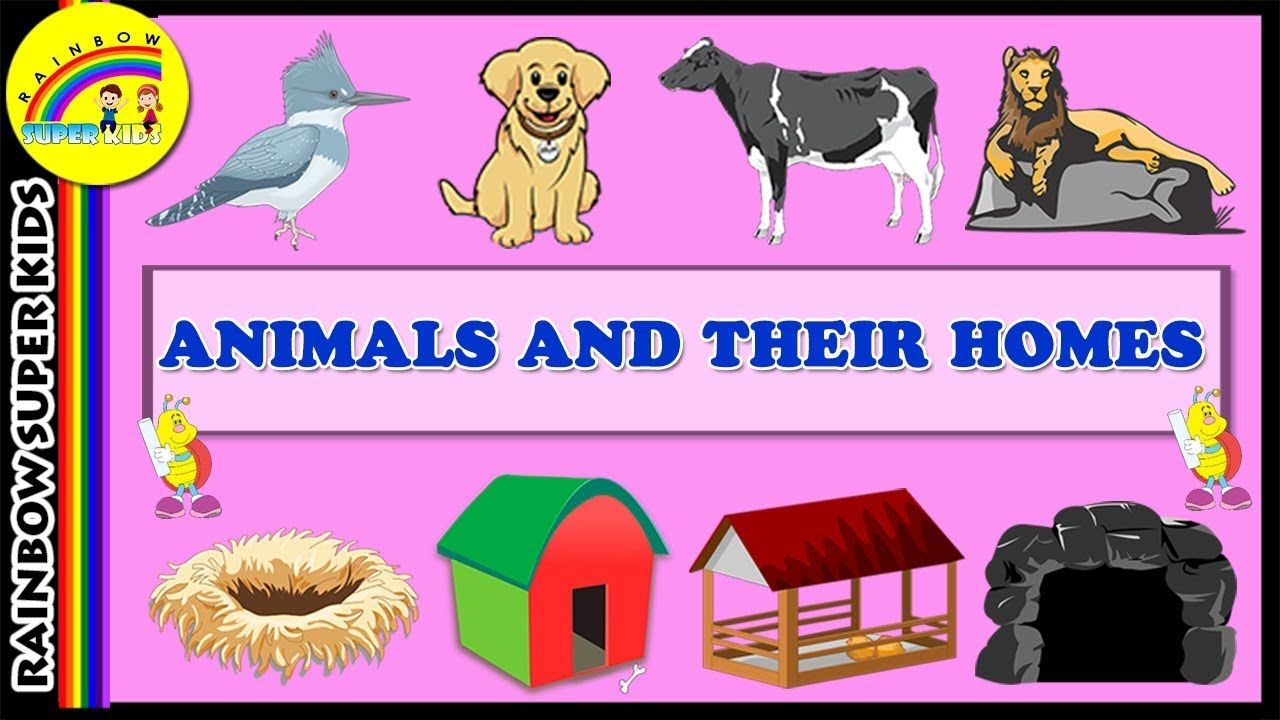 Animals and Their Homes Animal Shelter for Kids Learn