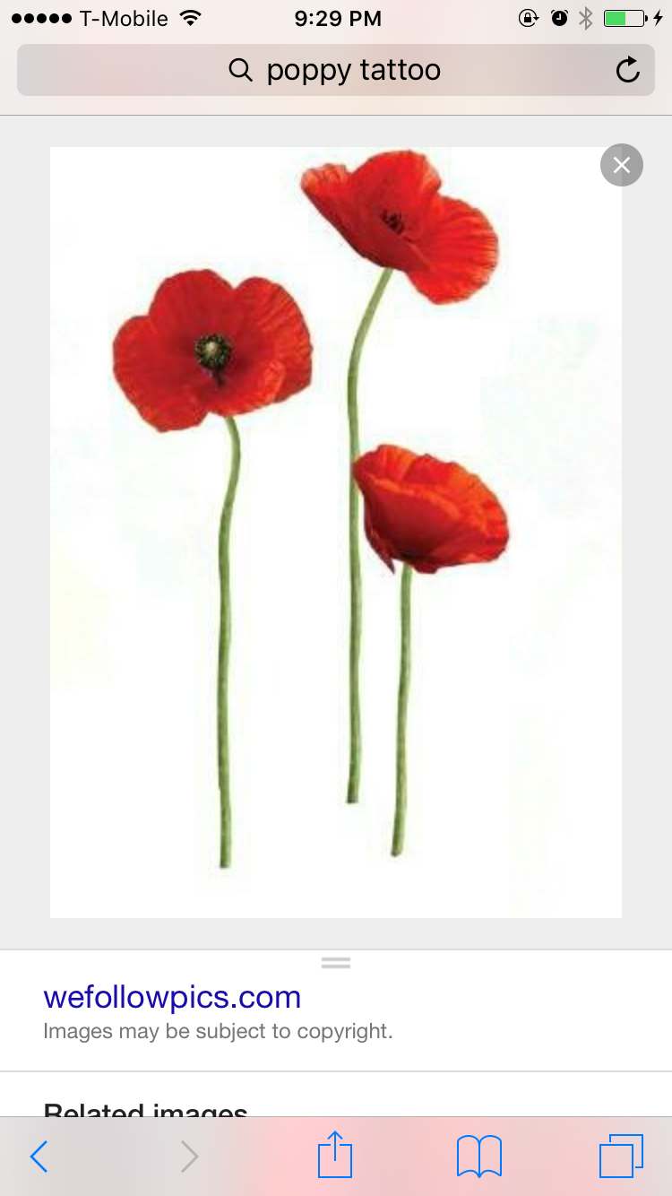 Pin by aimee greenfield on poppies friends pinterest tattoo i want the closed poppy for a tat mightylinksfo
