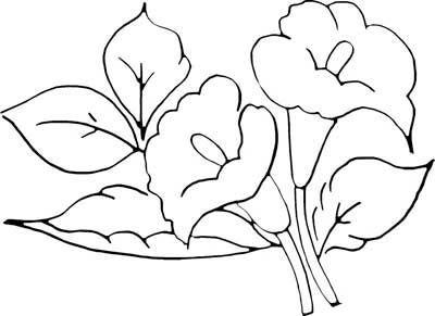 Risco Copo De Leite Flor Flores Artesanato Pintura De
