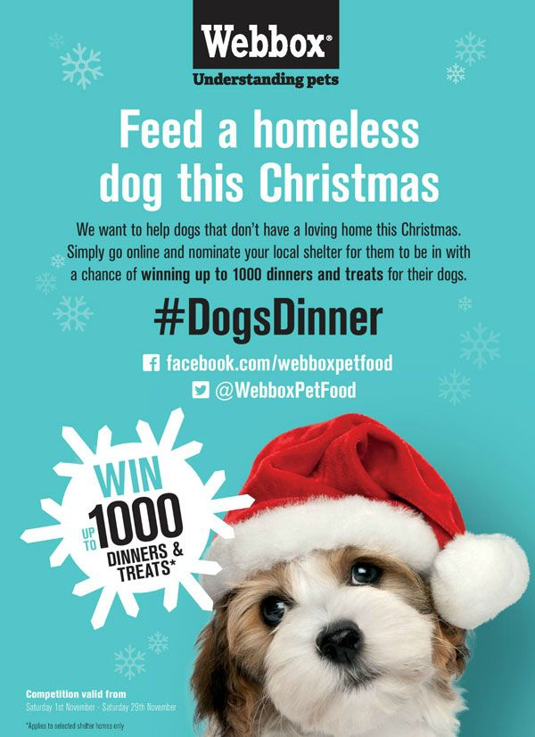 Firm S Festive Giveaway Helps Homeless Dogs Leading Uk Pet Food