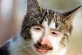 Man/cat?!