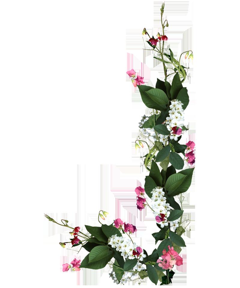 Flores Naturales Natural Flowers Elvi Pinterest Borders For